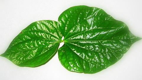 tri-ngua-vung-kin-bang-phuong-phap-dan-gian1