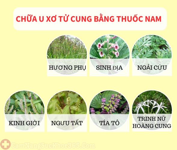 cách điều trị u xơ tử cung với các vị thuốc quanh vườn