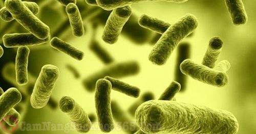 Vi khuẩn E.coli gây viêm niệu đạo