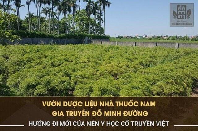 Vườn thảo dược sạch đạt chuẩn của Đỗ Minh Đường