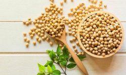 Sắt được tìm thấy nhiều trong đậu nành giúp tăng cường chuyển hóa vitamin D